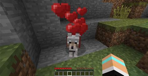 How to tame a dog/cat | General hints - Minecraft Game