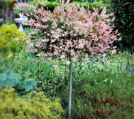 Cottage Farms Flamingo Willow Patio Tree - Page 1 — QVC