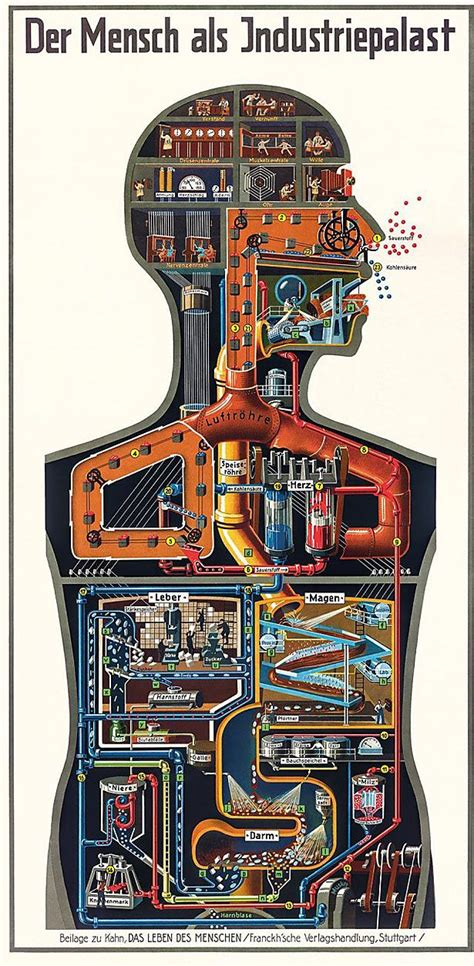 Fritz Kahn: The pioneer of infographics and his