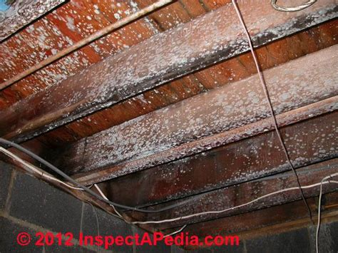 Mold & Mildew Cleaning Product Guide: mold solutions, mold