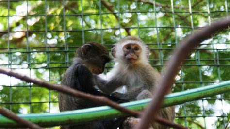 Home - Colobus Conservation | 2020